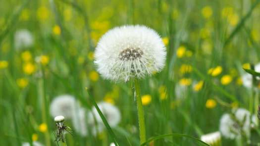 meadow-plant-background-grasses-159081